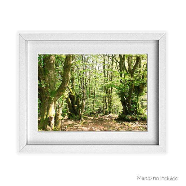 Lámina A3 bosque de Belate